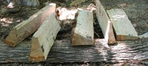 eighths and sixteenths of white oak