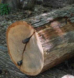 wedges splitting white oak
