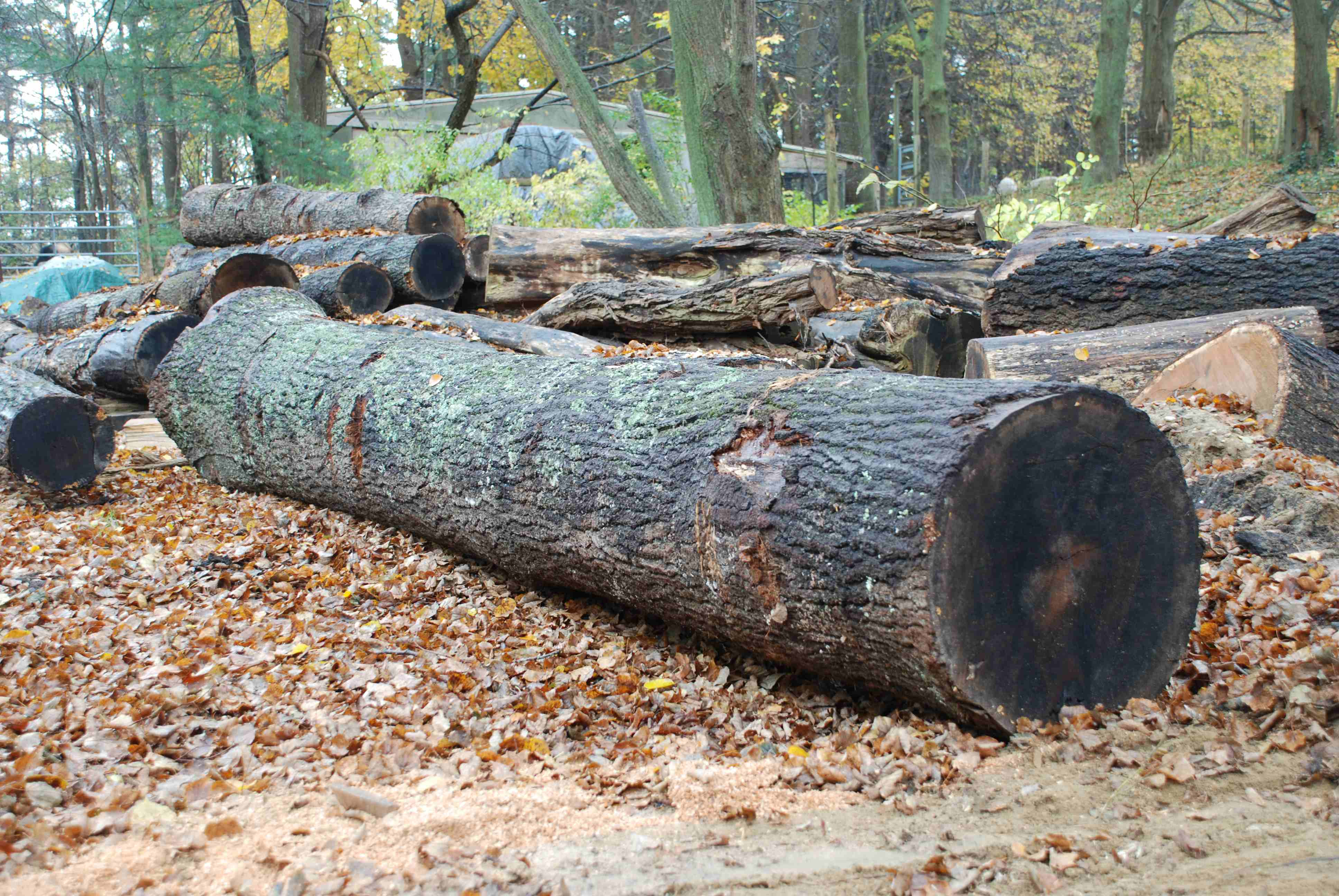 red-oak-log-2.jpg