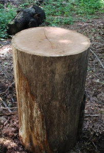 "oak log, 18"" diameter, 30"" long"
