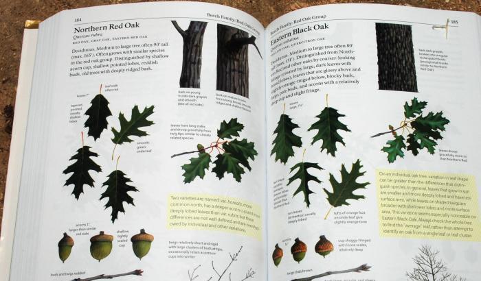 oak pages