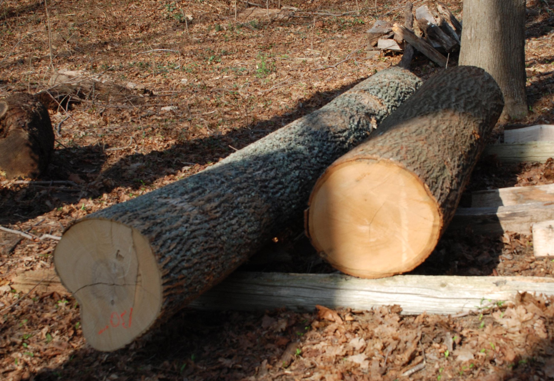 Oak Logs Peter Follansbee Joiner S Notes