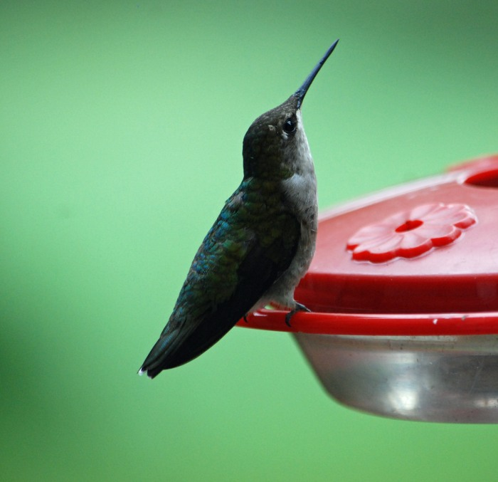 hummer posed