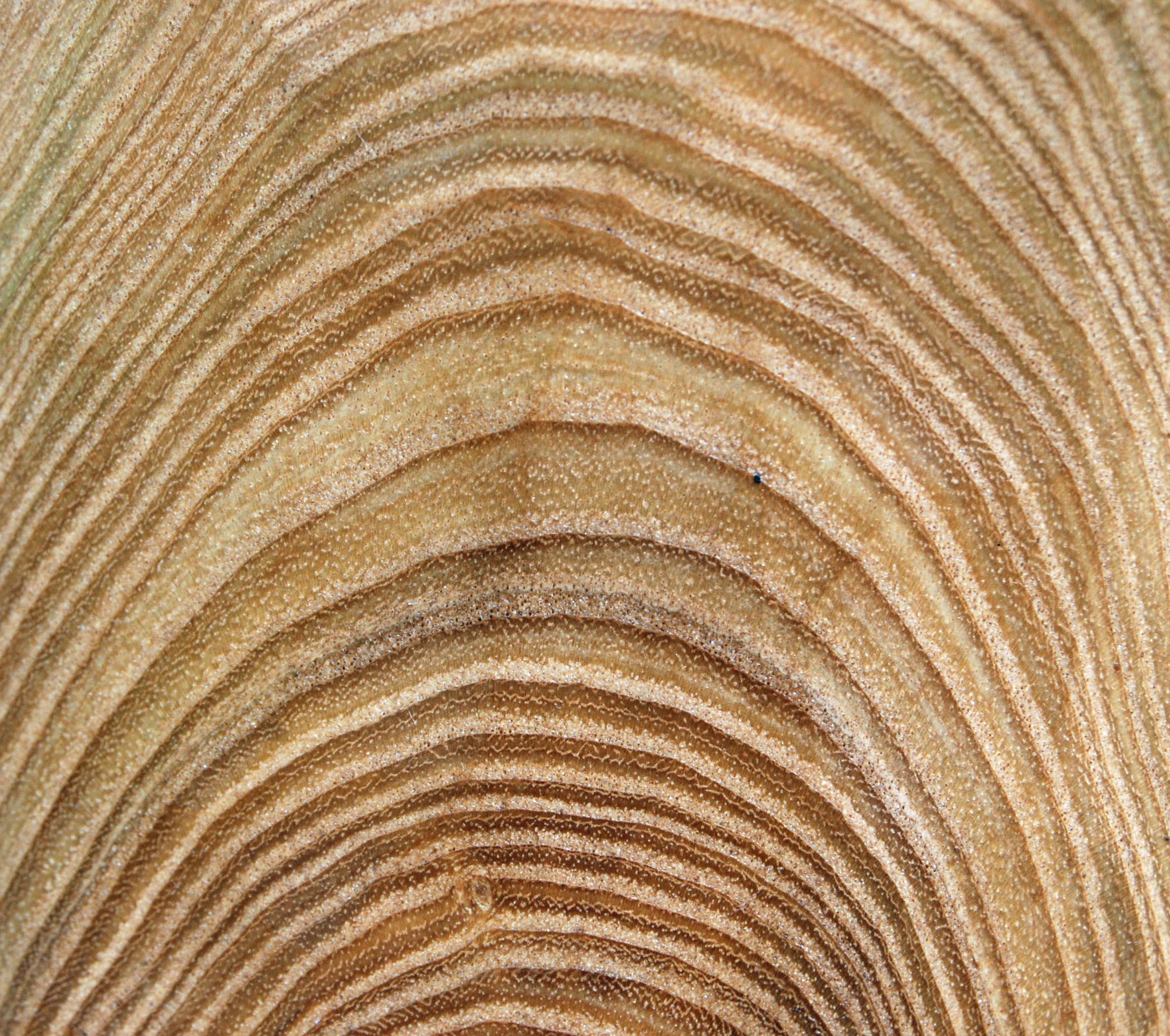 catalpa end grain