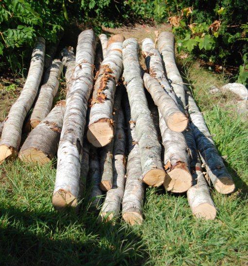 birch logs 2b