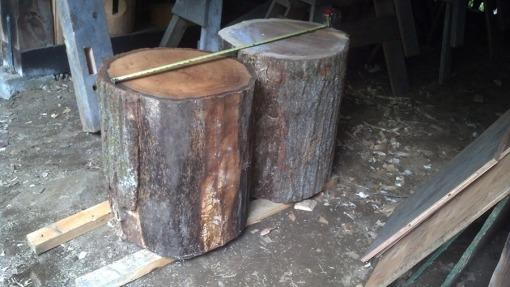 oak bolt