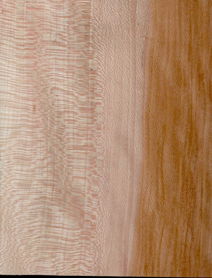 sycamore sample figured wood
