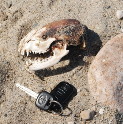 skull scale